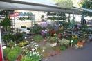 Bloemen en Planten  3