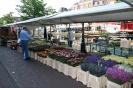 Leidse Markt - Heden en verleden_144
